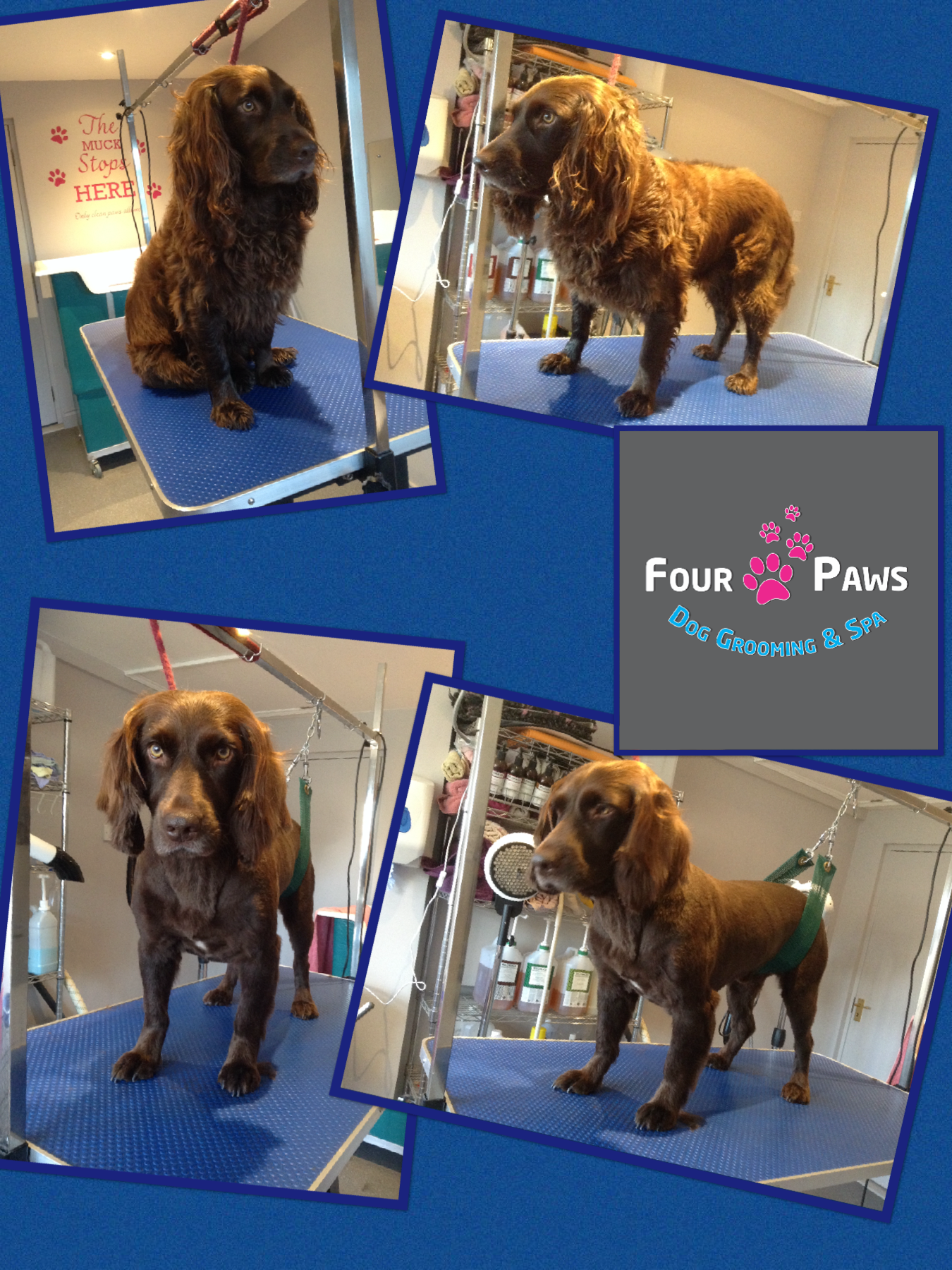 Dog Grooming Amp Spa In Reading Four Paws